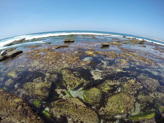 san diego tide pools